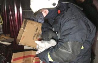 Bursa'da itfaiye erinden yangında kalan kedilere...