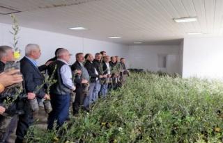 Marmarabirlik'ten 7 bin zeytin fidanı