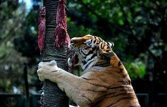 Bursa Hayvanat Bahçesi'nde nefes kesen beslenme egzersizleri