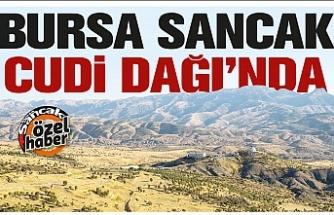 Bursa Sancak Cudi Dağı'nda