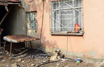 Bursa'da çocuğa saldıran köpekler sahipli çıktı