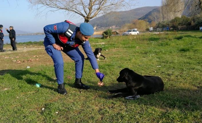 İznik Sahili'ndeki sahipsiz köpekleri beslediler