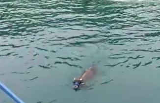 Bayramın ilk günü Rize'den denize girdi, 4 gün sonra Trabzon açıklarında yakalandı